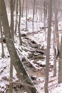A ravine bounces down a snow-covered wooded hillside